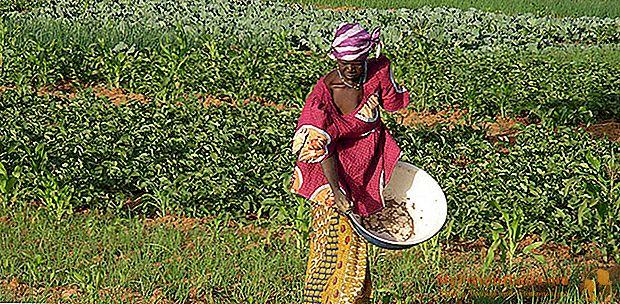 Weibliche Landwirtschaft, die gut abschneidet