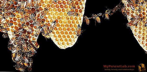 Las abejas necesitan nuestra ayuda: salvémoslas ... para salvarnos a nosotros mismos