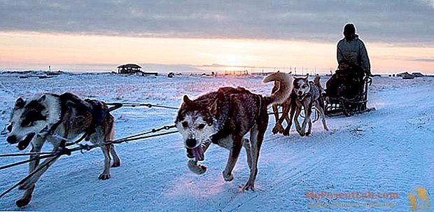 """Shishmaref, el pequeño pueblo esquimal que se """"derrite"""" junto con el hielo"""