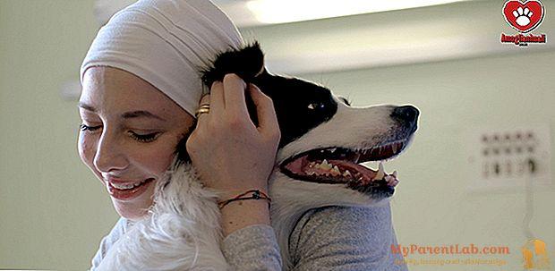 Animales en el hospital: en Lombardía ahora es posible