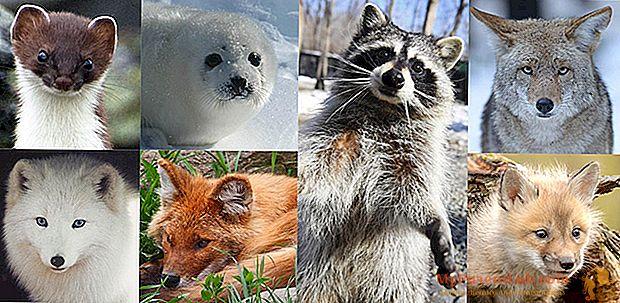 حيوانات الفراء لإنقاذ