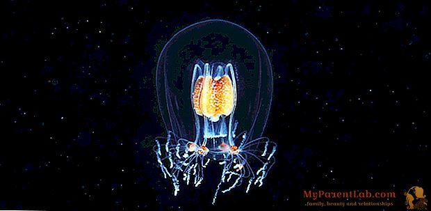 ¿Diseño de obras maestras? No, invertebrados marinos.