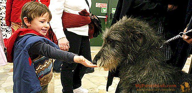 Miten valita ihanteellinen koira lapsille ja perheelle