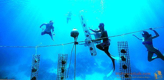 الغوص في بورا بورا. البحث عن اللؤلؤ الأسود