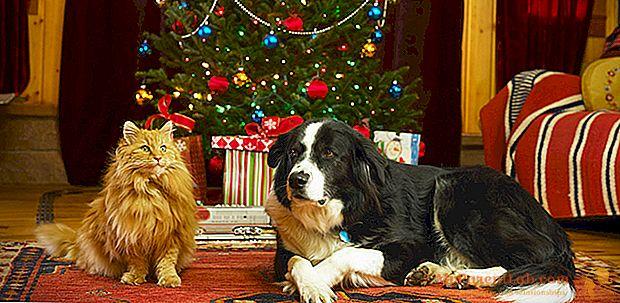 Dê um cachorro ou um gato para o Natal: as regras para uma escolha informada