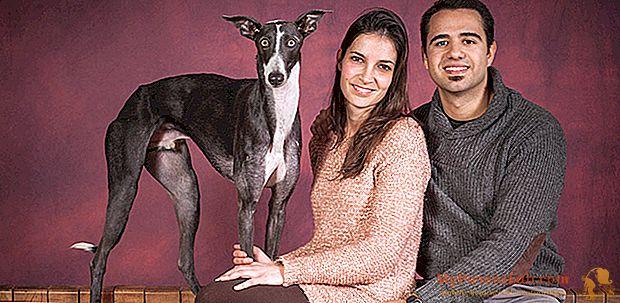 דיוקן של חג האהבה עם הכלב: האהבה הנאמנה ביותר